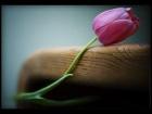Hina_ahmad