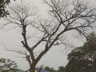 Rain Tajon