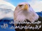Aafia Hira