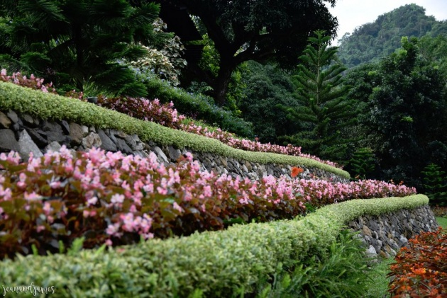 The First Flower Terraces In The Philippines