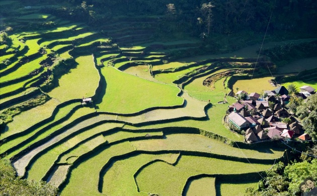 batad_rice_terraces