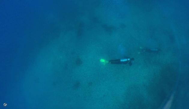 whaleshark_underwater_video
