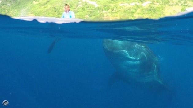 whalesharks_oslob_cebu