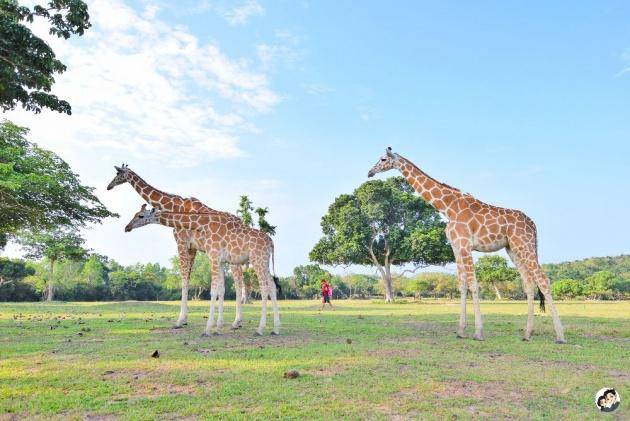 calauit_safari_park