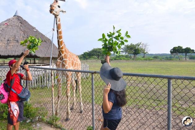 safari_animals