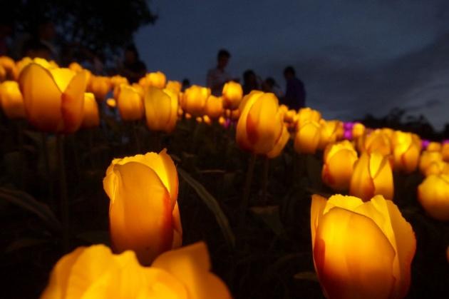 glowing_flowers