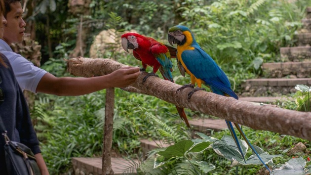 cebu_safari_adventure_park