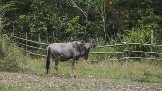 cebu_safari