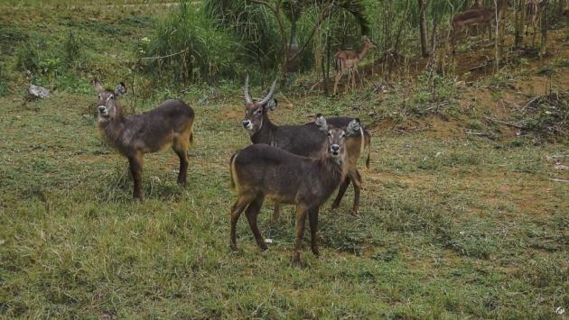 cebu_safari_and_adventure_park