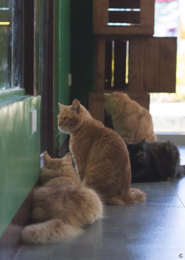 cat_cafe_philippines