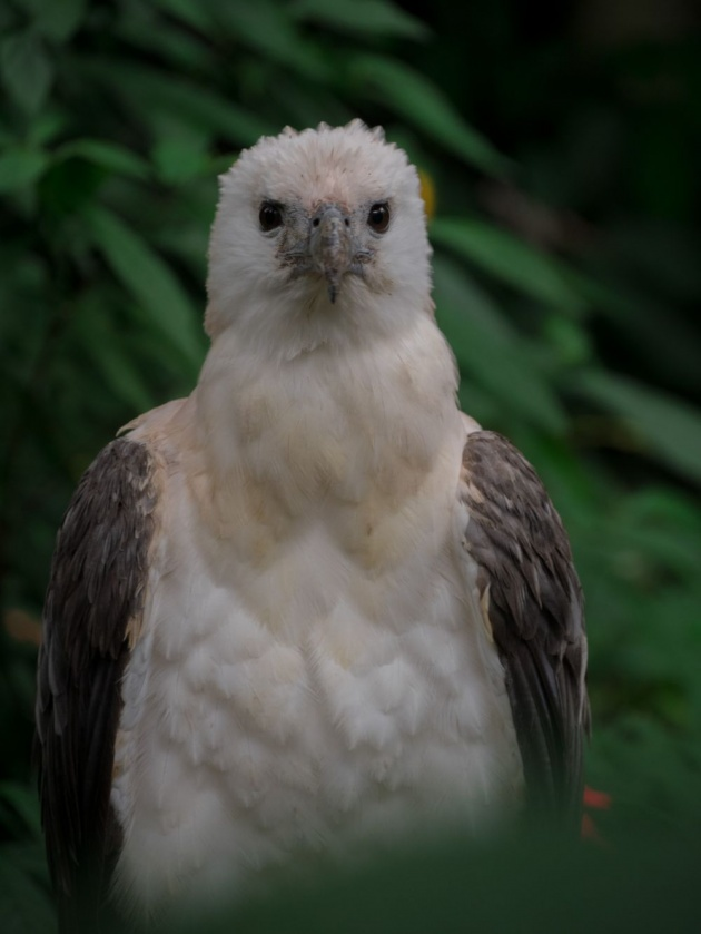 philippine_eagle_foundation
