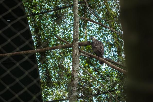 philippine_eagle_preservation