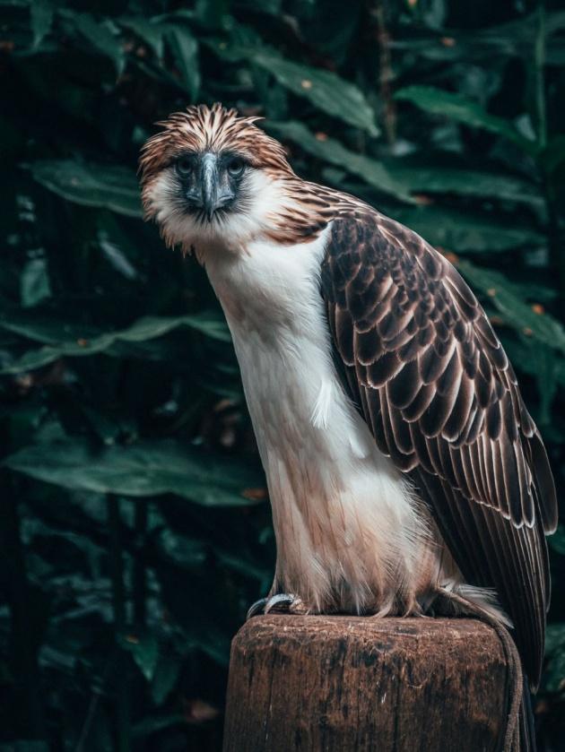 philippine_eagle_center_tour