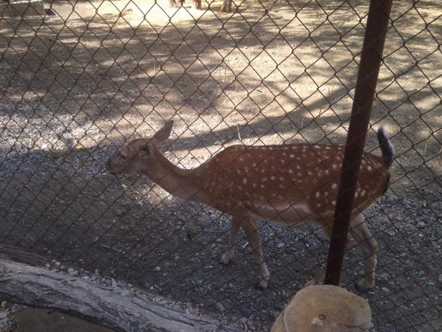 bulgaria_aytos_zoo