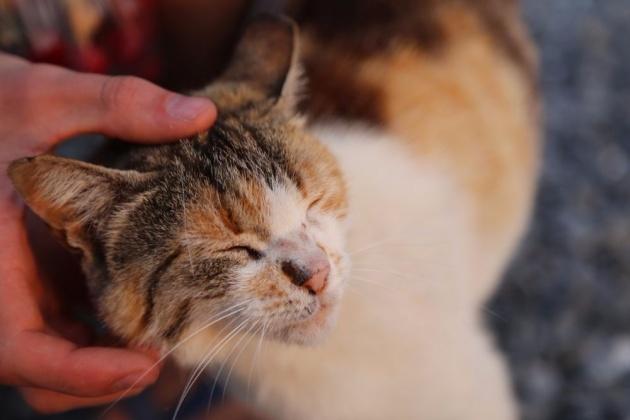 cat_benefits