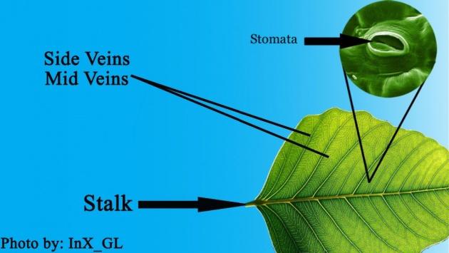 parts_of_plants_stem