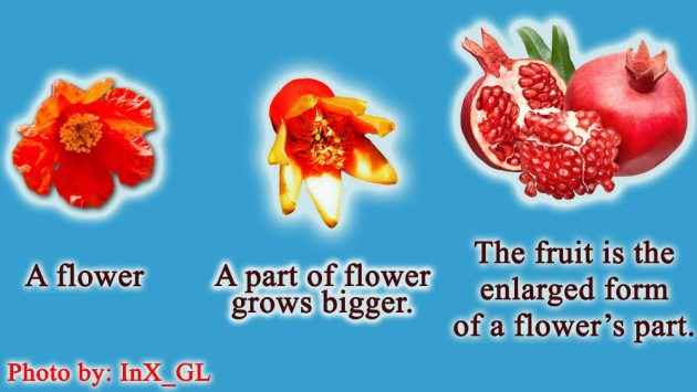 how_do_seeds_of_plants_move