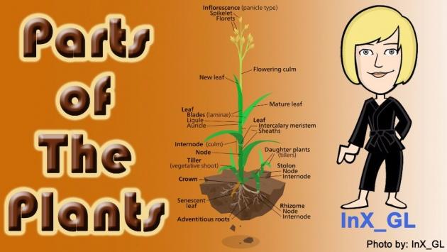 parts_of_plants