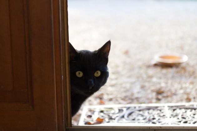 know_cat