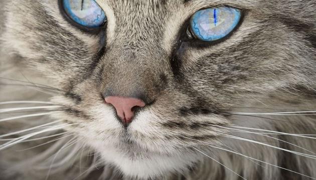 cat_languages