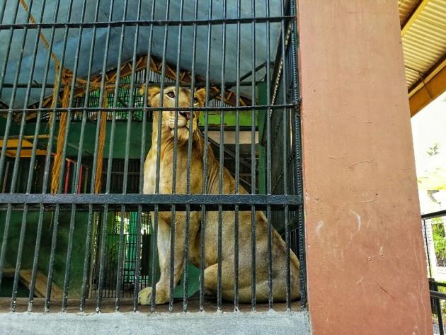 animal_zoo