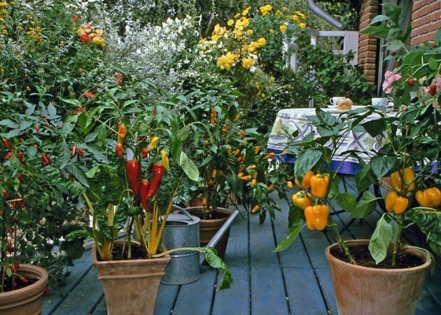 gardening_guide