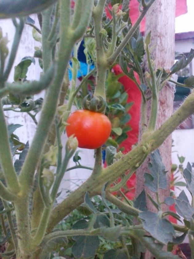 gardening_made_easy