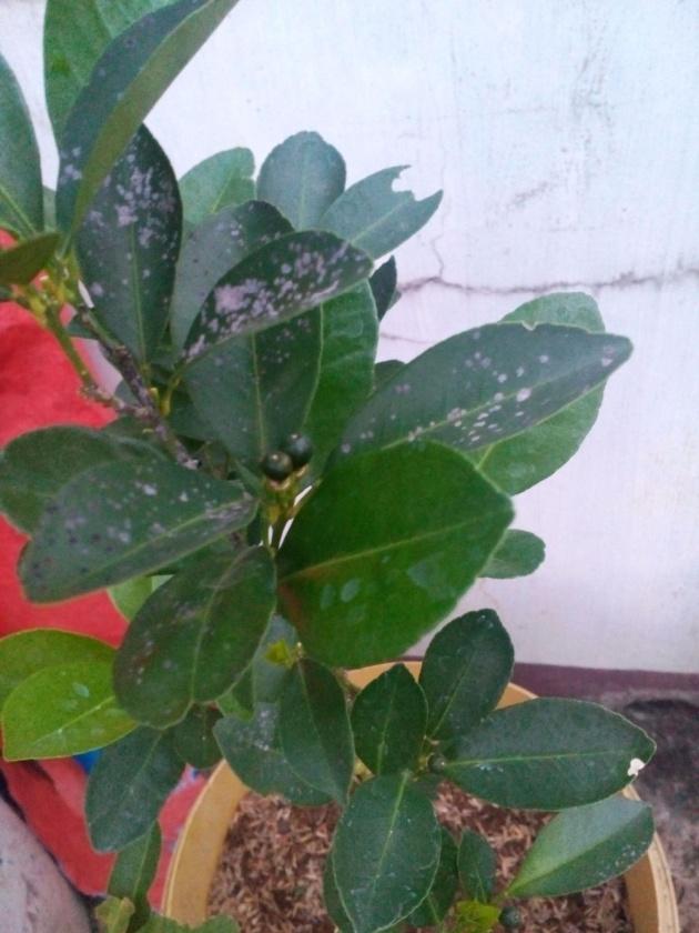 gardening_pots