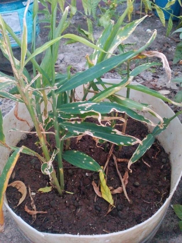 gardening_plants