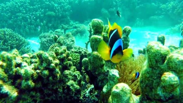 underwater_world