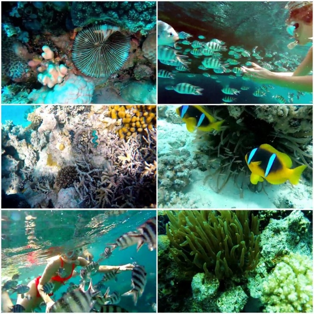 coral_reefs_in_the_red_sea