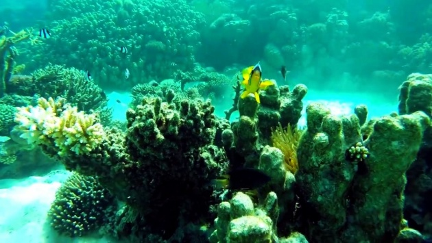 coral_reefs