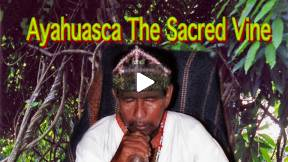 Ayahuasca the Sacred Vine preview