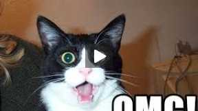 Top 10 Cat Superpowers!