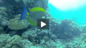 Exploring the Underwater Wonders of Palawan