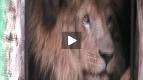 Zoo in Nasice