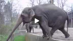 Elephant are so smart!