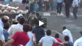 Funny video of Bull fighting festival -2