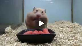 OMG> Gluttonous mice!