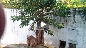 BEAR IN THE ZOO