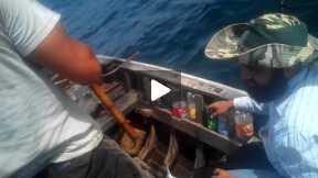 Mackerel Fish on Trolling