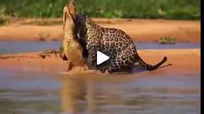 Most Amazing Wild Animal Attacks #2 - CRAZIEST Animal Fights  -  lion,,anaconda, deer, Crocodile  01