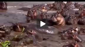 Most Amazing Wild Animal Attacks #2 - CRAZIEST Animal Fights  -  lion,,anaconda, deer, Crocodile 02