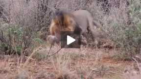 Most Amazing Wild Animal Attacks #2 - CRAZIEST Animal Fights  -  lion,,anaconda, deer, Crocodile 03