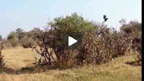 Most Amazing Wild Animal Attacks #2 - CRAZIEST Animal Fights  -  lion,,anaconda, deer, Crocodile 05