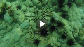 What To See in Oslob's Underwater