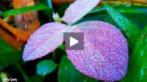 Droplets' animated slideshow