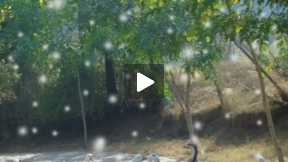 A slidefilm of Ayub National Park Rawalpindi