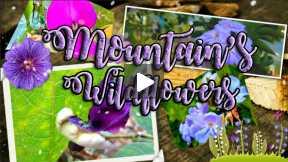 Mountain's Wildflowers