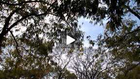 My First Video through mynewcamera